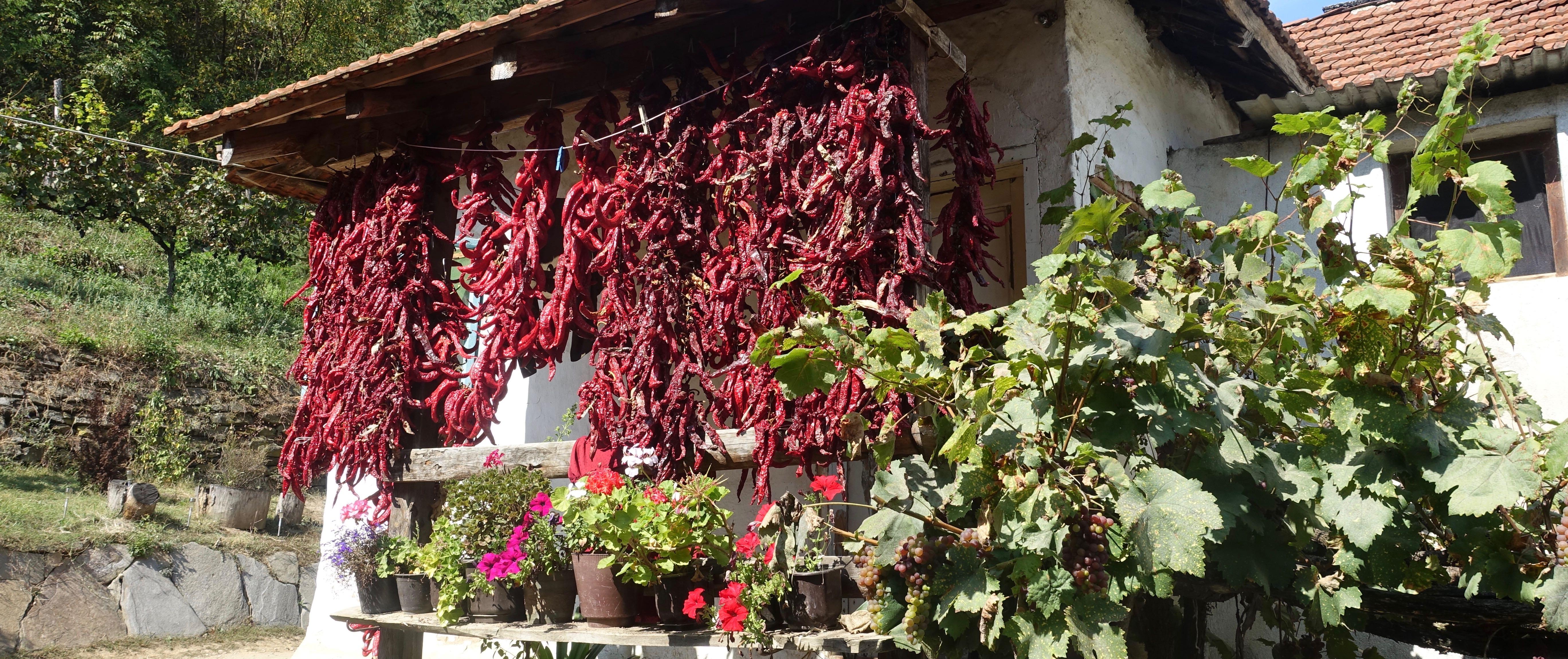 Paprika hängen aufgefädelt zum Trocknen unter einem Dachvorsprung